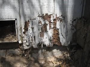 נזקי טרמיטים בעץ
