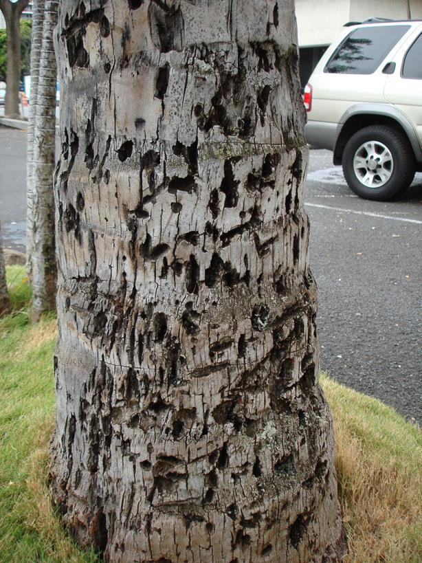 עץ שהותקף על ידי טרמיטים